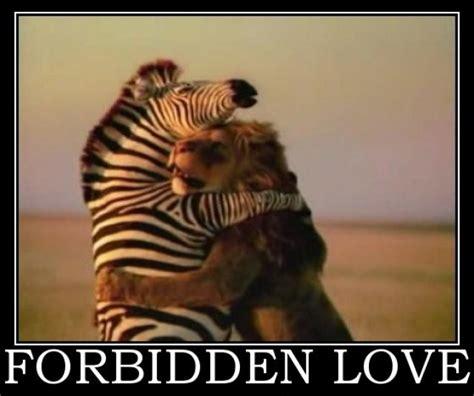 Love Meme Pictures - animal love memes