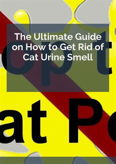 how to get rid of cat urine smell authorstream