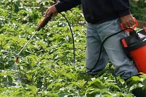 Insecticide Savon Noir Bicarbonate : growing vegetables nutrient dense vegetables ~ Dailycaller-alerts.com Idées de Décoration
