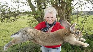 Meet the next contender for the world's biggest rabbit ...