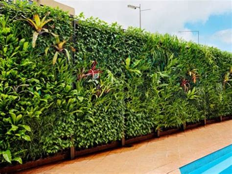 Used In Vertical Gardens by Vertical Garden For Home Fence Design 2019 Ideas