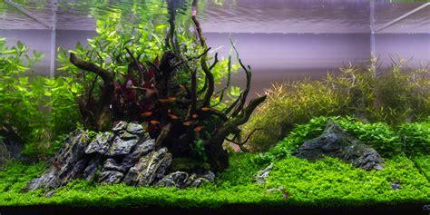 Aquascape Ada by Aquascape No 4 Ada 90p Nature S Centerpiece Pic
