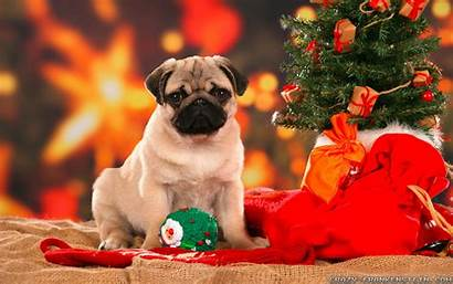 Christmas Merry Wallpapers Dogs Halloween Wizard Holidays