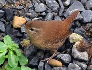 Kleine Vögel Im Garten : bild 1 aus beitrag beobachtung der v gel impressionen ~ Lizthompson.info Haus und Dekorationen