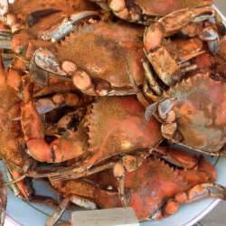 Maryland Blue Crab Recipes
