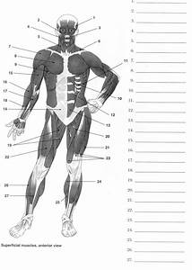 Blank Muscle Diagram Of The Human Body