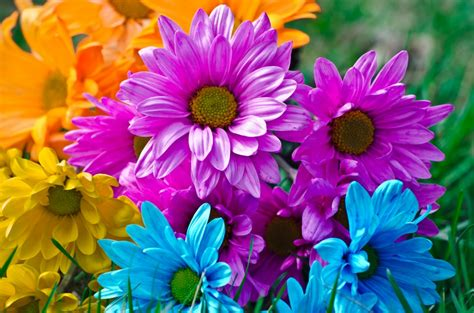 bright flowers bright flowers jigsaw puzzle in puzzle of the day puzzles on thejigsawpuzzles com