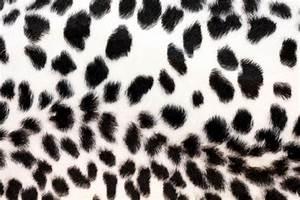 Cheetah print wallpaper, black and white cheetah black and
