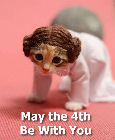 May the 4th be with you ! #cat #starwars #funny #leila ...