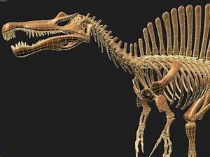 dino spinosaurus skeleton 3d model - CGStudio