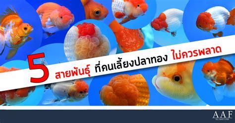ปลาทอง 5 สายพันธ์ุยอดฮิต ที่ไทยคนนิยมเลี้ยงมากที่สุด