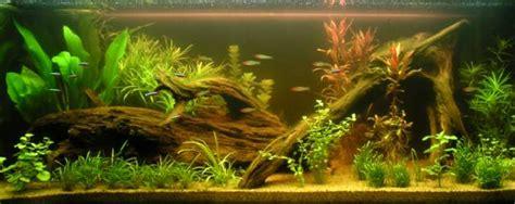 aquarium eau douce eau verte