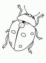 Bug Coloring Pages Printable Bugs Insect Insects Print Beetle Ladybug Getcoloringpages Printcolorfun Cartoon Comments Results Coloringhome Bestcoloringpagesforkids sketch template