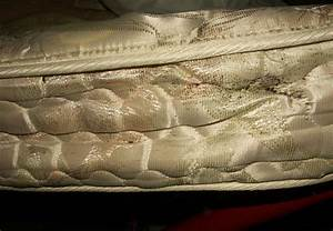 dont discard bed bug infested furniture colonial pest With bed bug infested mattress
