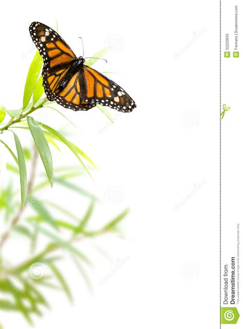 butterfly   plant isolated  white border background