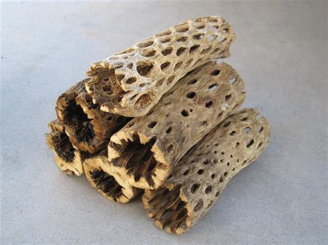 cholla cactus wood ls 6 pieces of cholla cactus wood 6 inch logs by thedesertstop