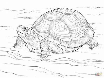 Turtle Coloring Box Pages Eastern Drawing Clipart