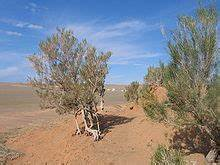Animals and Plants | The Gobi Desert