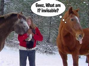 23 Funny Horse ... Funny Christmas Horse Quotes
