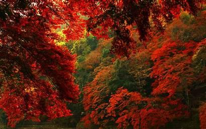 Forest Autumn Desktop Hq Pixelstalk