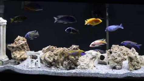 125 Gallon African Cichlid Aquarium - YouTube