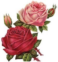 Vintage Pink Rose Transparent