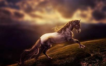 Horse Android Wallpapers Apps Google Play