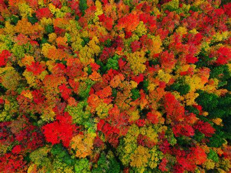 fall color oc fall foliage colors in peacham vermont 4000x3000