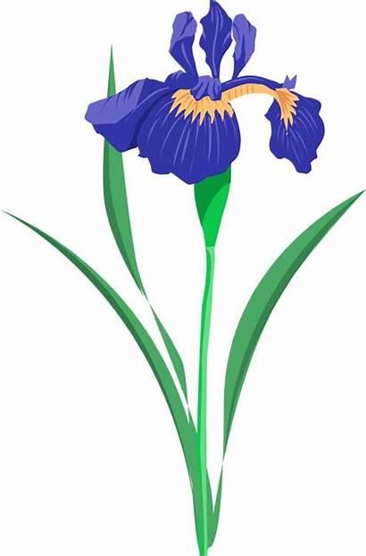 Iris Flower Clipart Flowers Summer Clip Purple