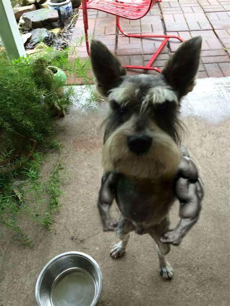 usuarios de reddit photoshopean imagen de perro enojado