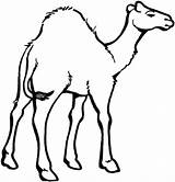 Camel Coloring Pages Face Printable Clipart Drawing Colouring Template Oasis Desert Animals Colornimbus Clip Mask Animal Clipartmag Getdrawings sketch template