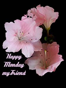 happy monday sms wallpapers quotes wishes images