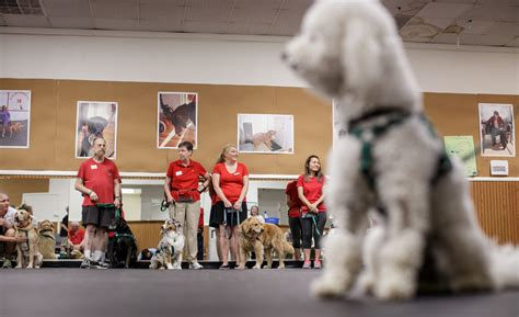 takes  train  therapy dog howard county times
