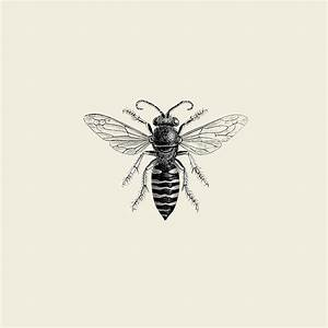 Photo Illustration of Bee