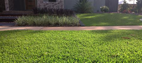 Premium Turf Suppliers Darwin And The Nt