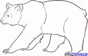 How to Draw Bears, Step by Step, forest animals, Animals ...