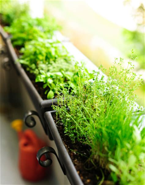 Windowsill Garden Box by Diy Window Box Garden