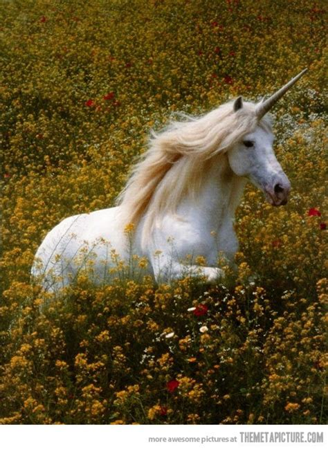 unicorns  real    magical real