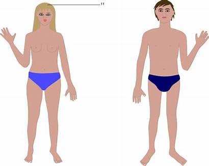 Human Boy Diagram Clipart Cartoon Clip Parts