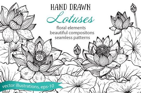 hand drawn graphic lotus flowers  images