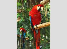 Animales en peligro de extincion Animales en extincion