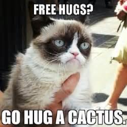 cat memes 10 new grumpy cat memes
