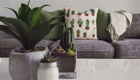 hardy houseplants   wont kill