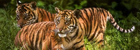 chester zoo destination merseyside merseyrail train times journey planner