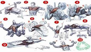 Chest Workout Chart - Best Fitness Workout Healthy Body Fit Ab - Project Next