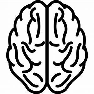 Cerebro en vista superior en esquema - Iconos gratis de médico