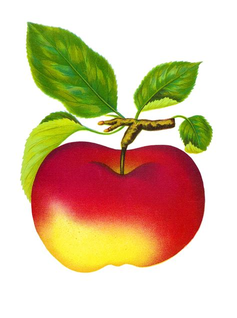 apple clipart clip apple page 3 cliparts