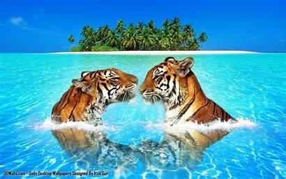 Wildlife Nature Desktop Animal Wallpapers Pc Atozcinegallery