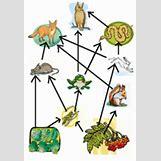 Mediterranean Monk Seal Food Web | 144 x 209 png 40kB