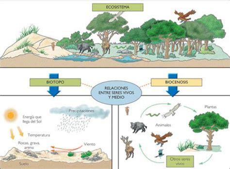 ecolog 237 a y educaci 243 n ambiental p 225 2 monografias
